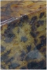 Gold Crown Dundee Cake Slab